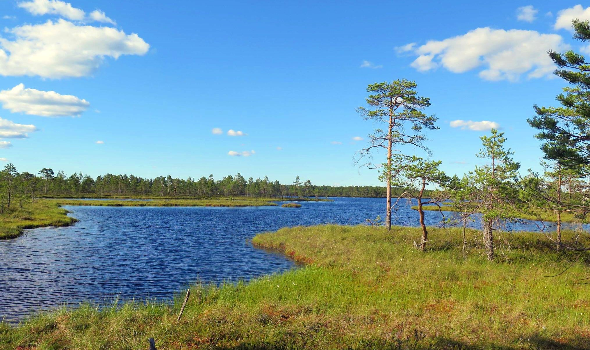 Kauhaneva-Pohjankangas National Park
