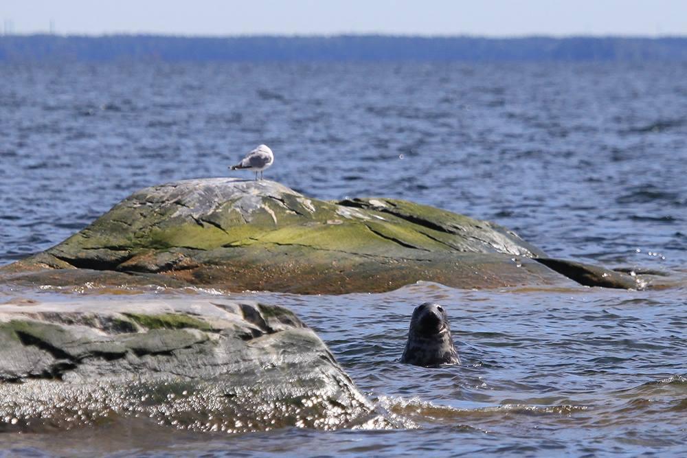 Ekenäs Archipelago National Park
