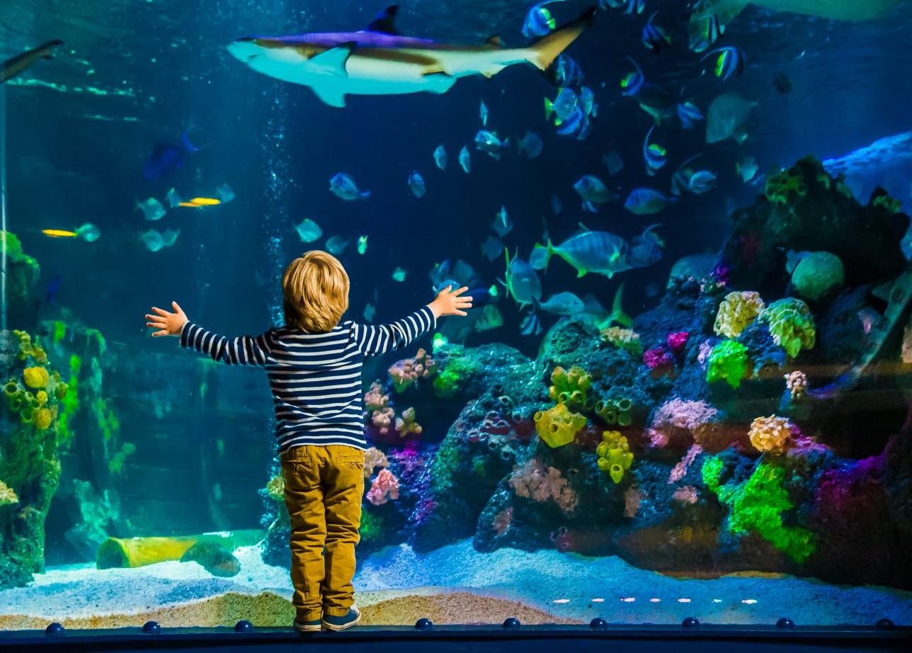 Linnanmäki Akvaario