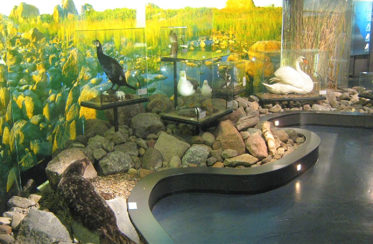 Terranova – Kvarken Nature Centre