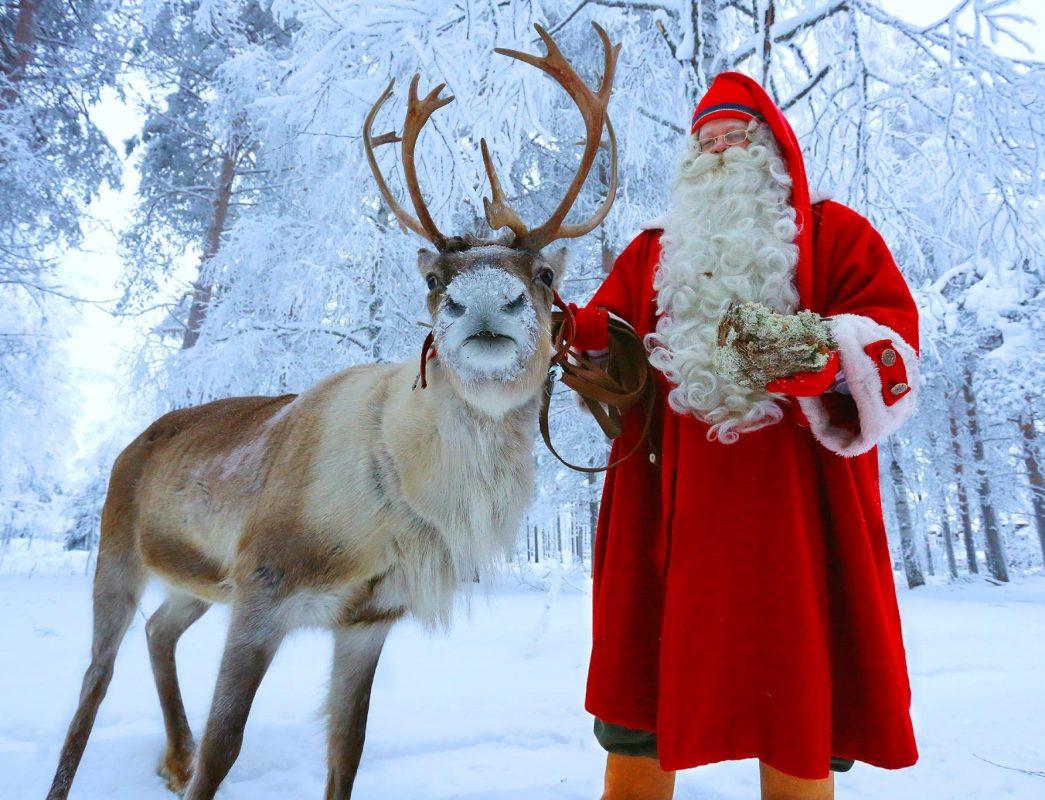 santa claus reindeer reindeer sleigh ride rovaniemi discovering finland - Santa Claus And Reindeers