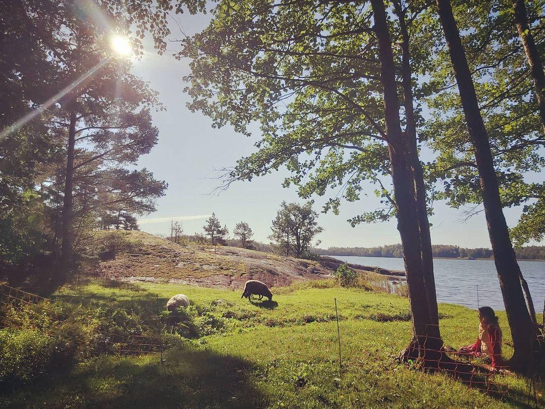 Björkholm