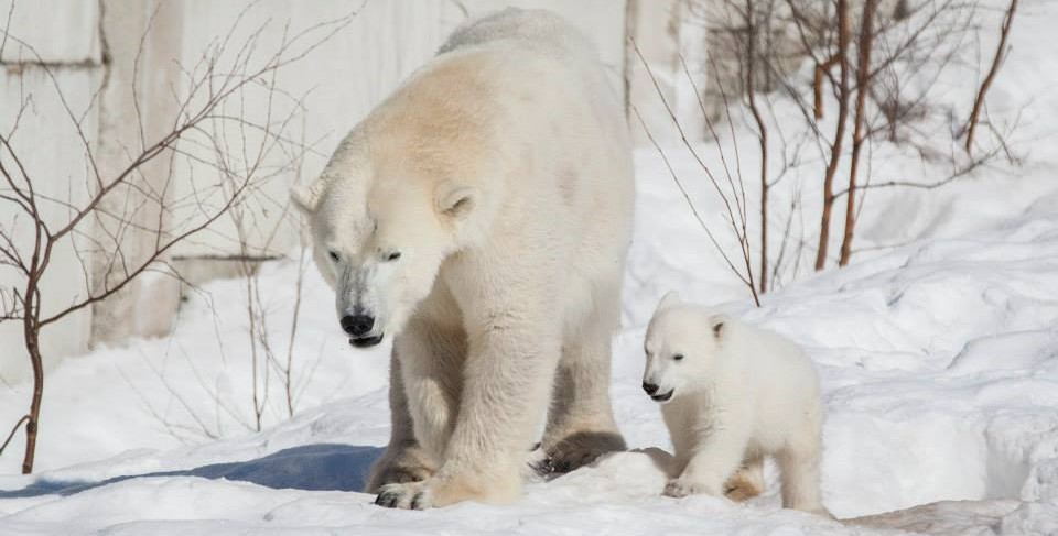 Family Vacations in Finland | Ranua Wildlife Park