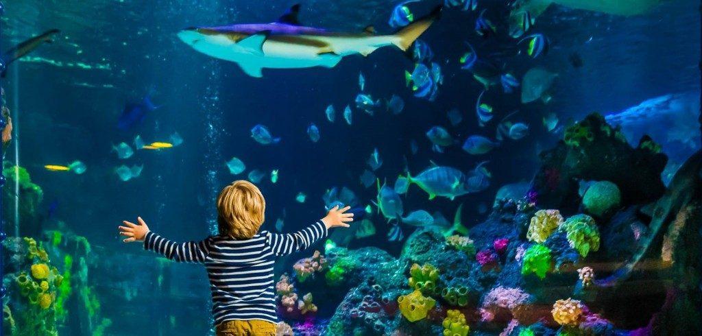 Sea Life Helsinki - Family Vacations in Finland