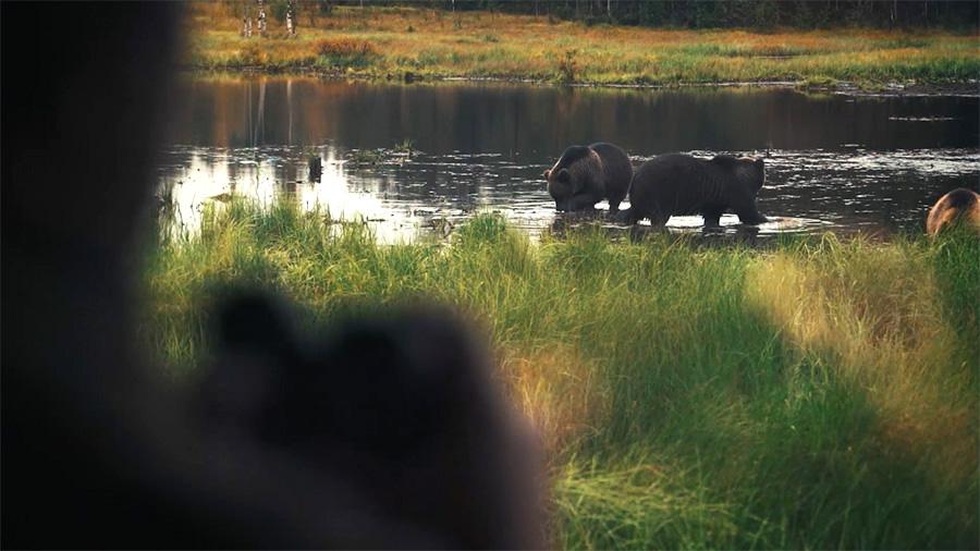Bear watching in Kuusamo