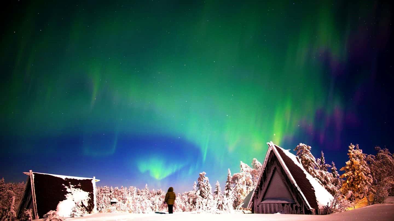 Arctic Giant Birdhouse Hotel